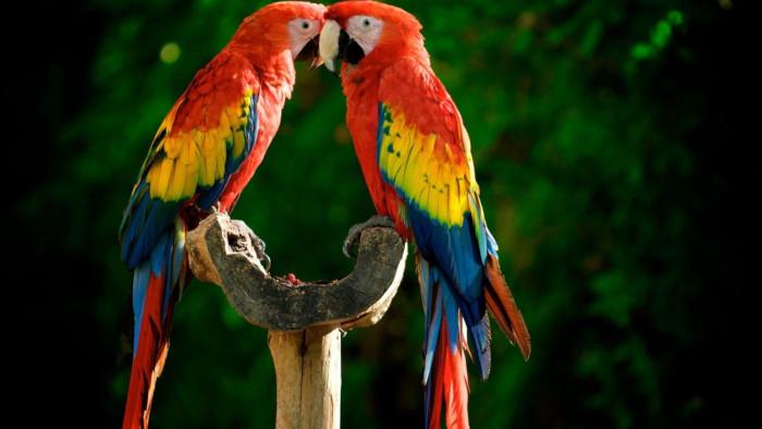 Gestão Escolar - Comunicação não Violenta Entre Papagaios